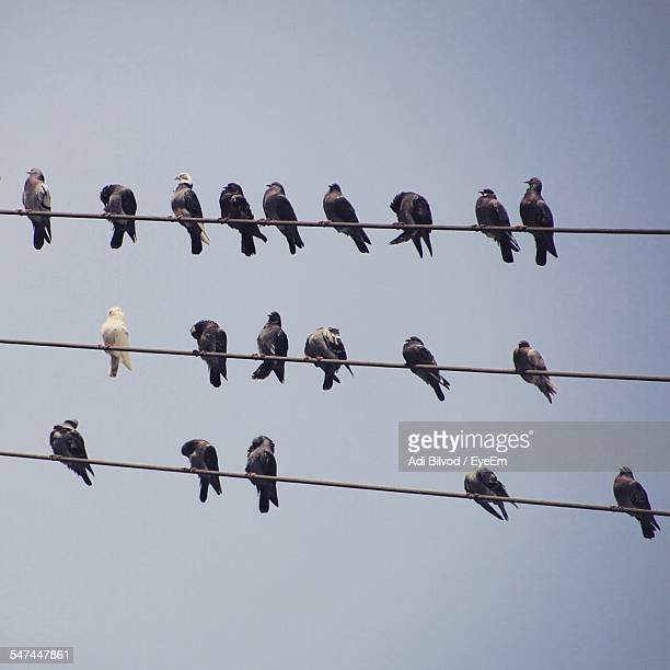 Low Angle View Of Pigeons On Power Lines Against Sky