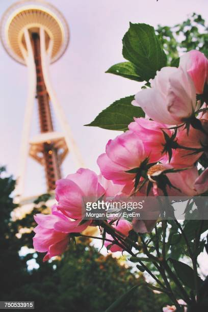 low angle view of pink flower tree against sky - space needle stock-fotos und bilder