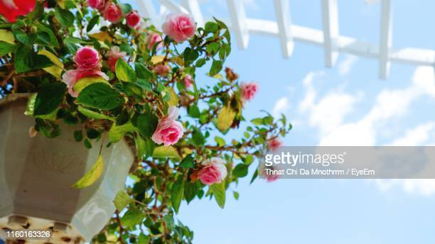 low angle view of pink flowering plant against sky - 雰囲気 ストックフォトと画像