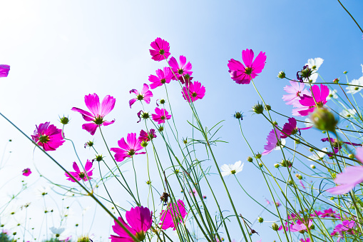 Low Angle View Of Pink Flowering Plants Against Sky - gettyimageskorea