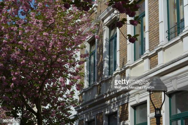 Low Angle View Of Pink Flowering Tree By Building