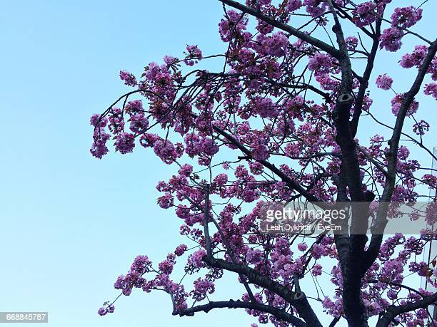 low angle view of pink flowers against blue sky - bad homburg stock pictures, royalty-free photos & images