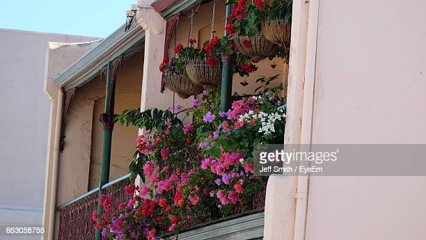 Low Angle View Of Pink Flowers Growing On Balcony
