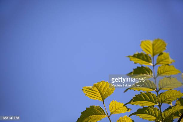 low angle view of plant against blue sky - paulien tabak foto e immagini stock