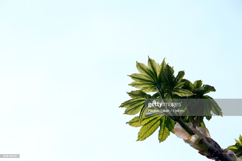 Low Angle View Of Plant Against Clear Blue Sky : Stockfoto