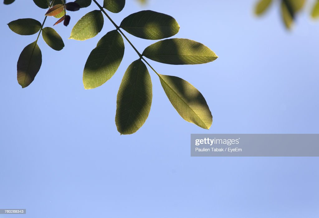 Low Angle View Of Plant Against Clear Blue Sky : Stock-Foto