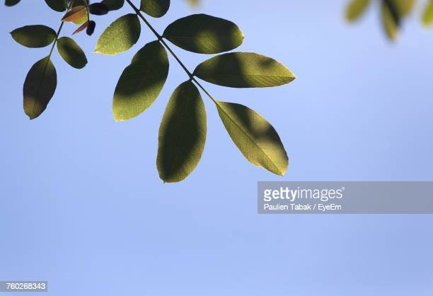 low angle view of plant against clear blue sky - paulien tabak stock-fotos und bilder