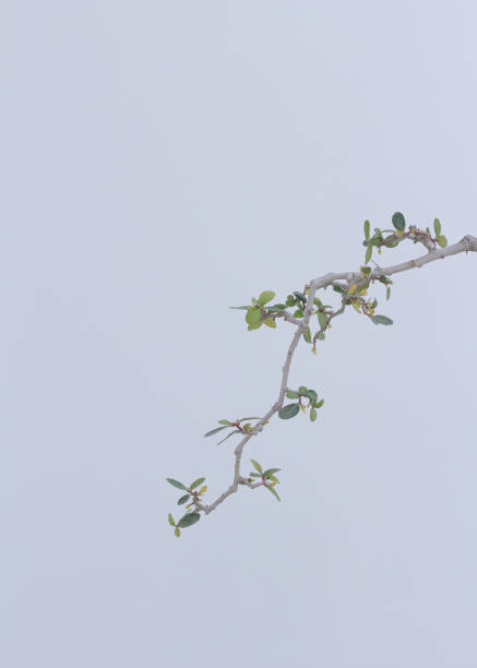 Low angle view of plant against clear sky,San Marino