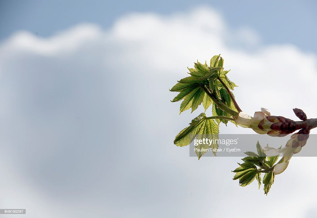 Low Angle View Of Plant Against Cloudy Sky : Stock Photo