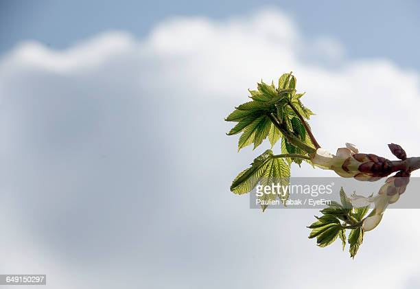 Low Angle View Of Plant Against Cloudy Sky
