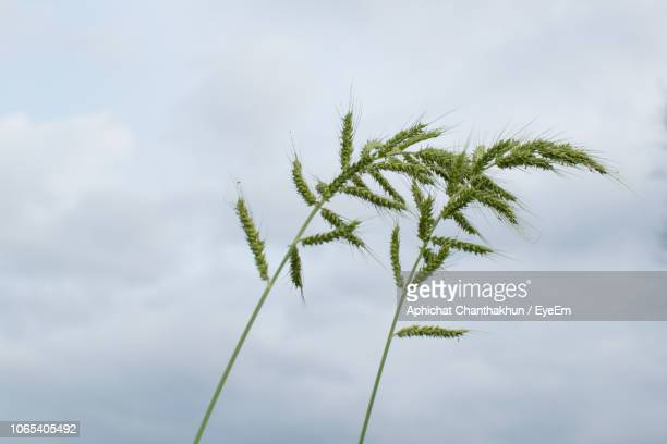 low angle view of plant against sky - thai mueang photos et images de collection