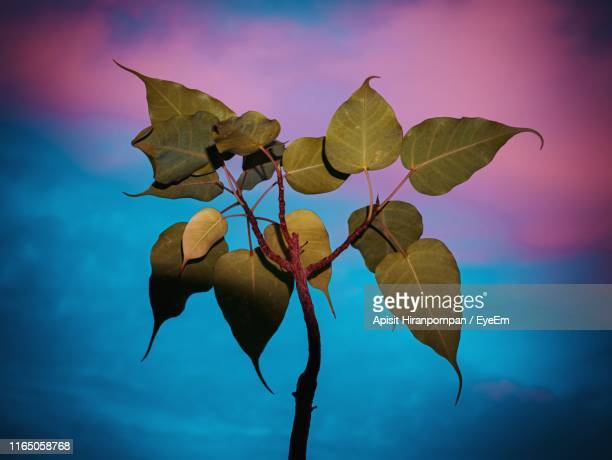 low angle view of plant against sky - apisit hiranpornpan stock pictures, royalty-free photos & images