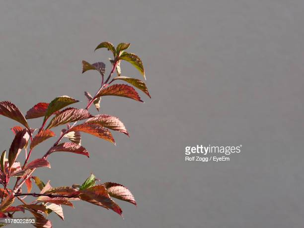 low angle view of plant against sky - sankt poelten stock pictures, royalty-free photos & images