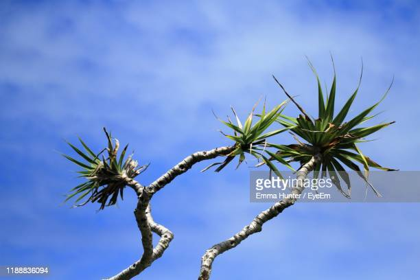 low angle view of plant against sky - emma hunter eye em stock photos and pictures