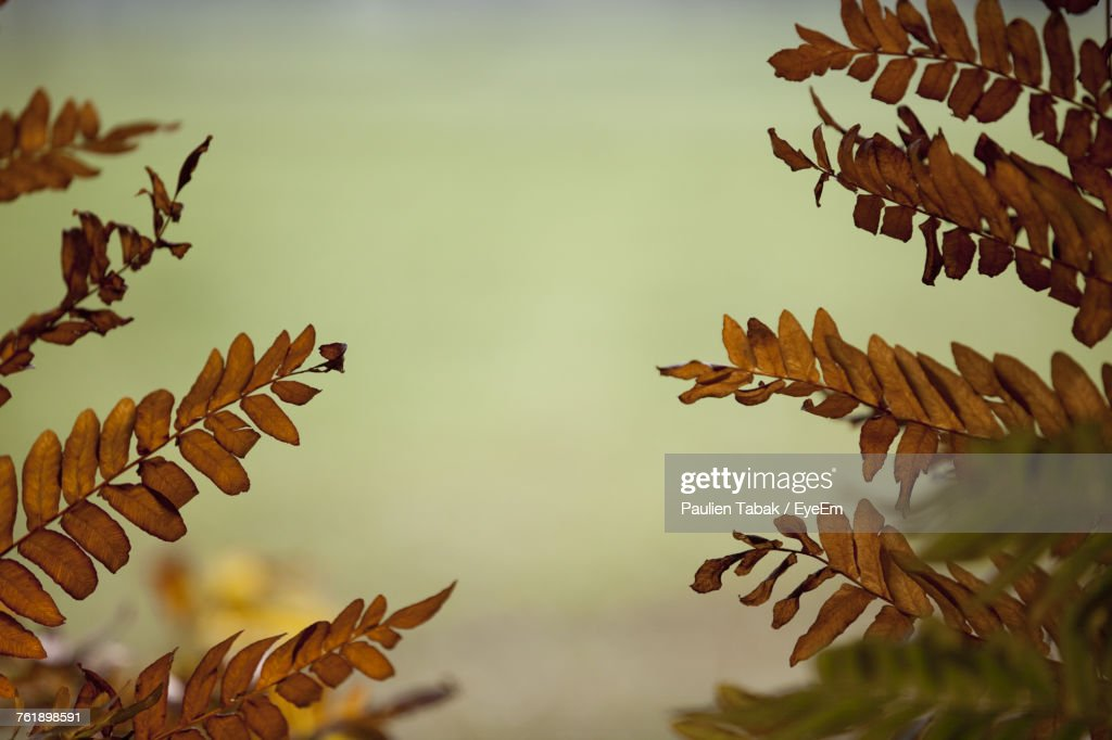 Low Angle View Of Plant Against Sky : Stockfoto