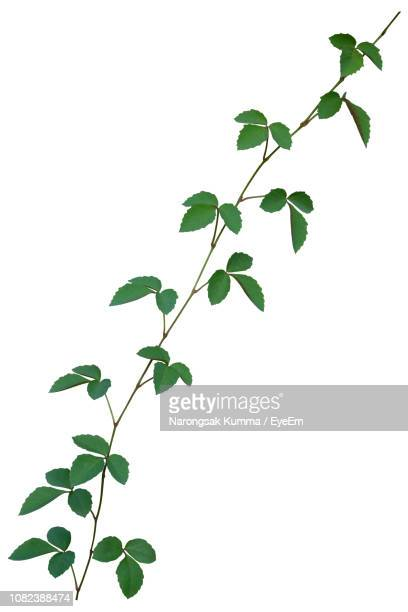 low angle view of plant against white background - creeper stock pictures, royalty-free photos & images