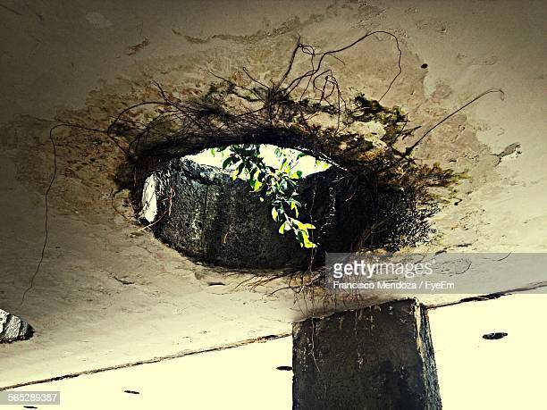 Low Angle View Of Plant Amidst Hole Made In Ceiling Of Old House
