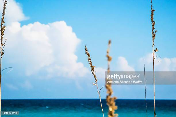 Low Angle View Of Plant By Sea Against Cloudy Sky On Sunny Day