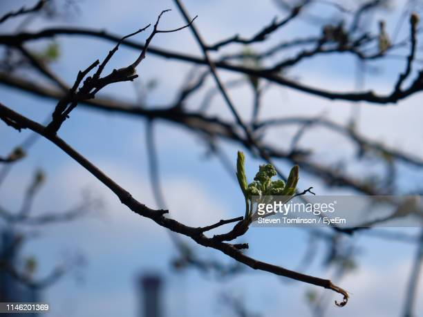 low angle view of plant on branch - bare tree stock pictures, royalty-free photos & images