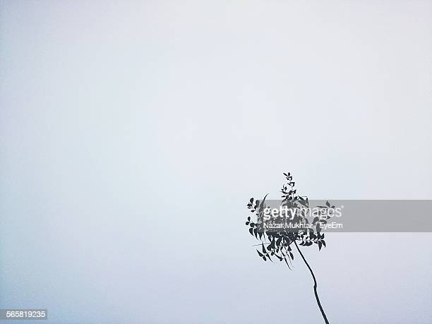 low angle view of plant - nazar stock photos and pictures