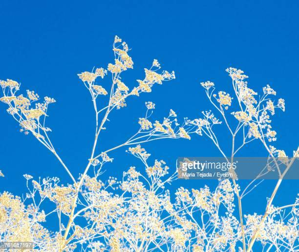low angle view of plants against clear blue sky - maria tejada stock pictures, royalty-free photos & images