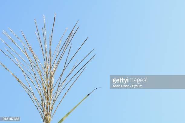 low angle view of plants against clear blue sky - olsen foto e immagini stock
