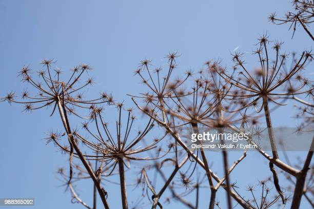 Low Angle View Of Plants Against Clear Sky During Winter