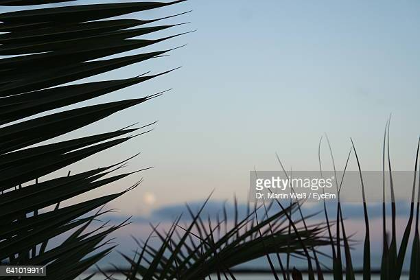 low angle view of plants against sky during sunset - weiß stock pictures, royalty-free photos & images