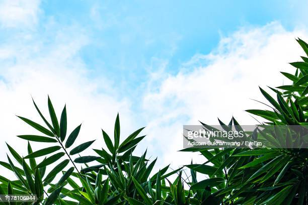 low angle view of plants against sky - bamboo plant stock pictures, royalty-free photos & images