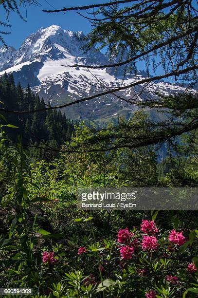 Low Angle View Of Plants And Trees On Mountain At Chamonix