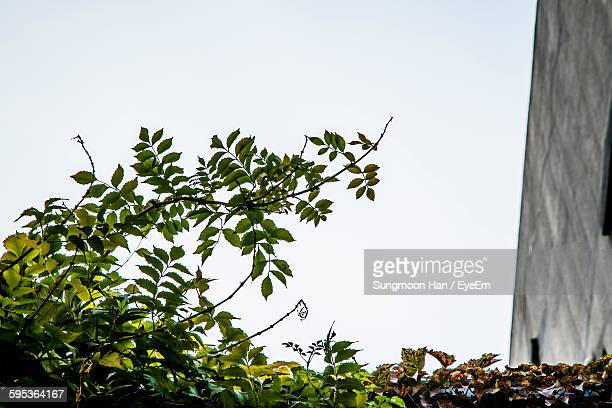 Low Angle View Of Plants Growing Against Clear Sky