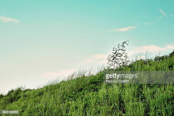 low angle view of plants growing on mountain against sky - liu he stock pictures, royalty-free photos & images