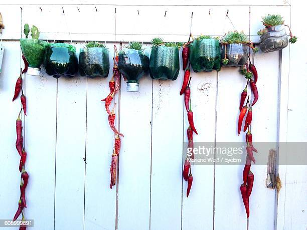 low angle view of plants in bottle hanging on wall - weiß stock pictures, royalty-free photos & images