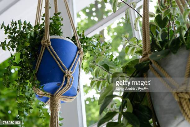 Low Angle View Of Plants In Macrame Holders