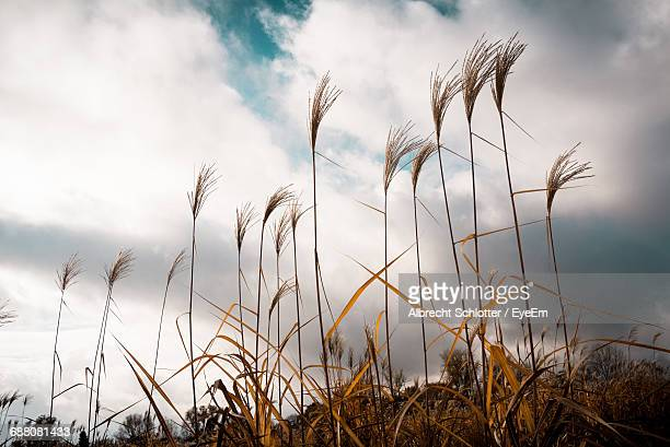 low angle view of plants on field against cloudy sky - albrecht schlotter stock photos and pictures
