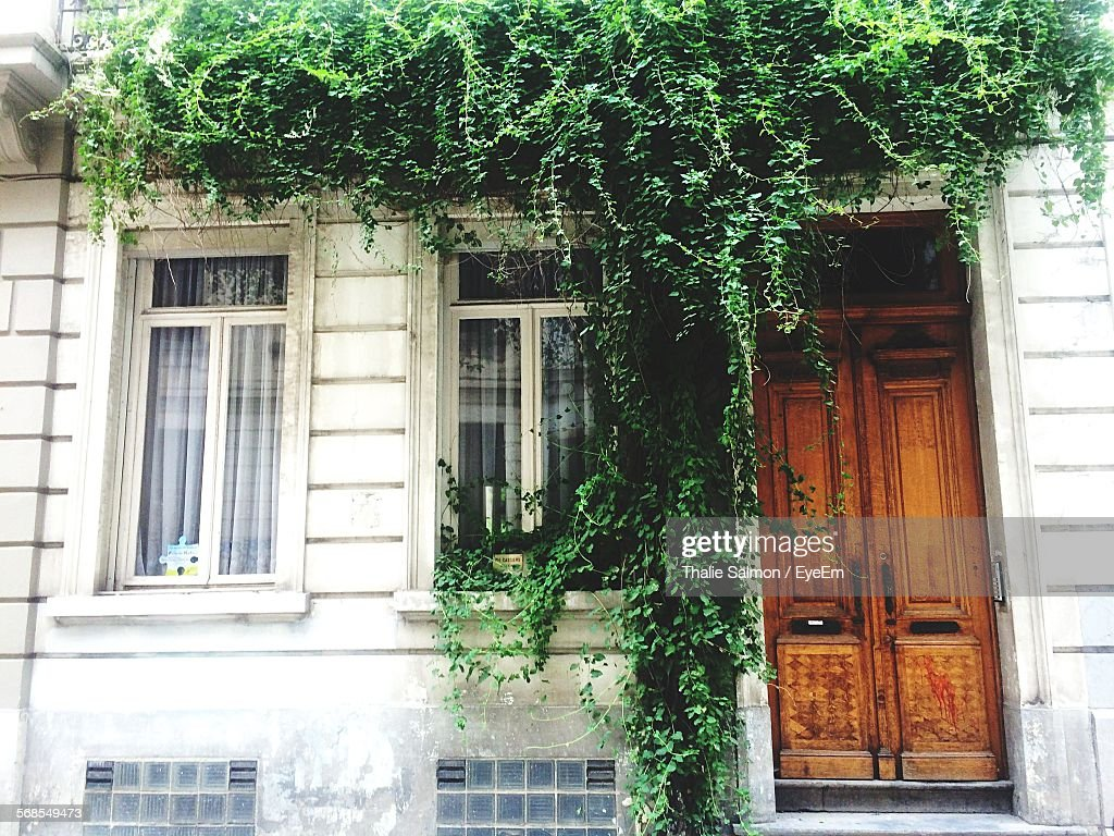 Low Angle View Of Plants On House : Stock Photo