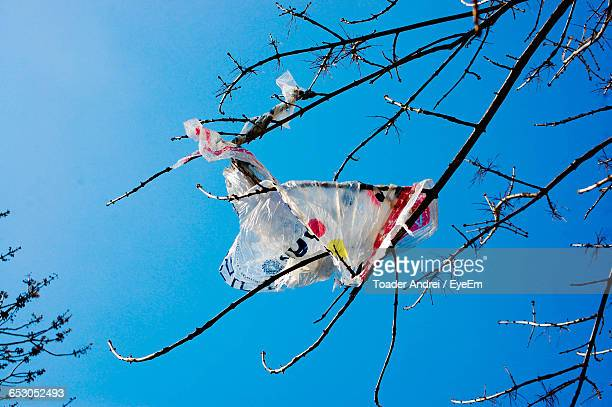 Low Angle View Of Plastic Stuck On Bare Tree Branches