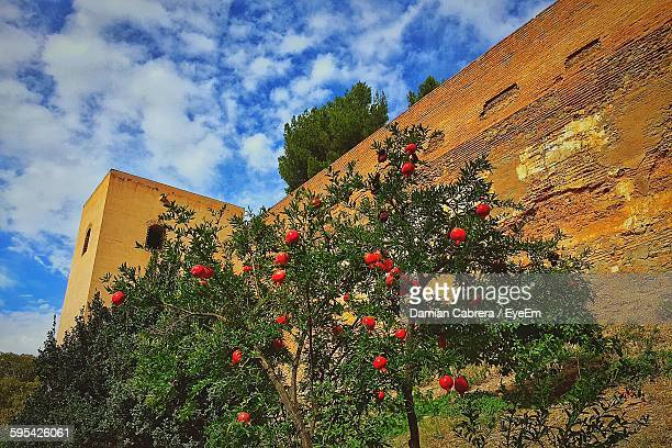 Low Angle View Of Pomegranate Tree Against Alhambra