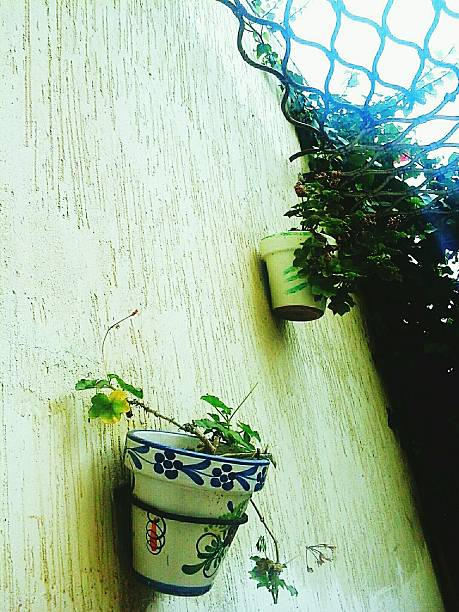 Low angle view of potted plants on wall
