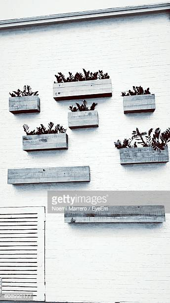 low angle view of potted plants on wall - noemi foto e immagini stock