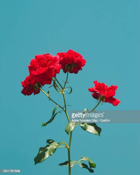 low angle view of red flowering plant against blue sky - flores fotografías e imágenes de stock