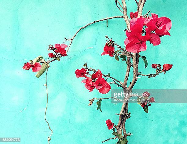 Low Angle View Of Red Flowering Plant Growing Against Sky