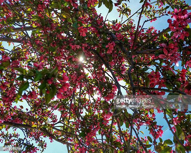 low angle view of red flowers growing on tree - johnson stockfoto's en -beelden