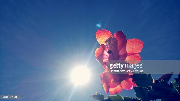 low angle view of red rose blooming against blue sky - beatriz cortazar fotografías e imágenes de stock