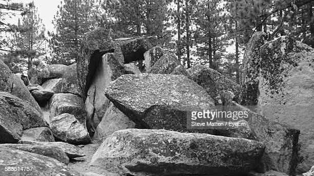 low angle view of rocks heap against trees in forest - steve matten stock pictures, royalty-free photos & images