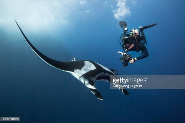 low angle view of scuba diver - animals in the wild stock pictures, royalty-free photos & images