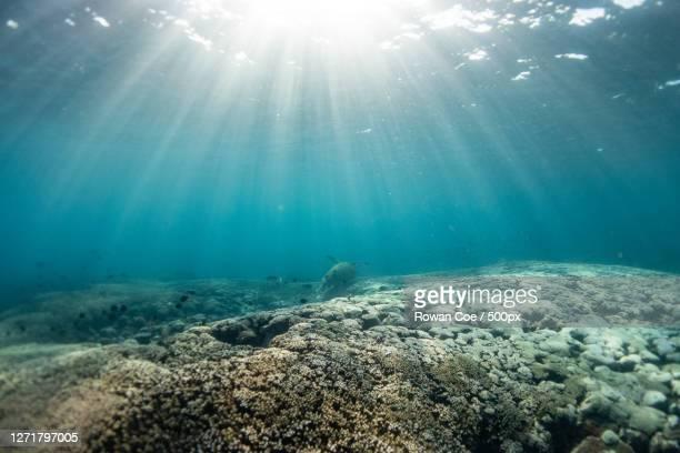 low angle view of sea, woorim, australia - fondo marino fotografías e imágenes de stock