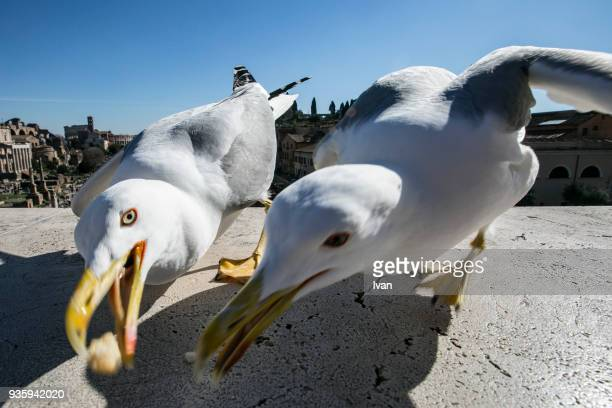 Low Angle View Of Seagull Catching Food