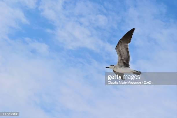 low angle view of seagull flying against sky - claudia marie stock-fotos und bilder