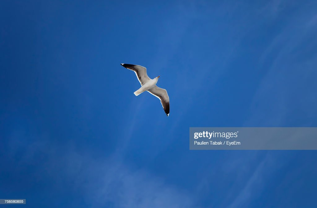 Low Angle View Of Seagull Flying Against Sky : Stockfoto